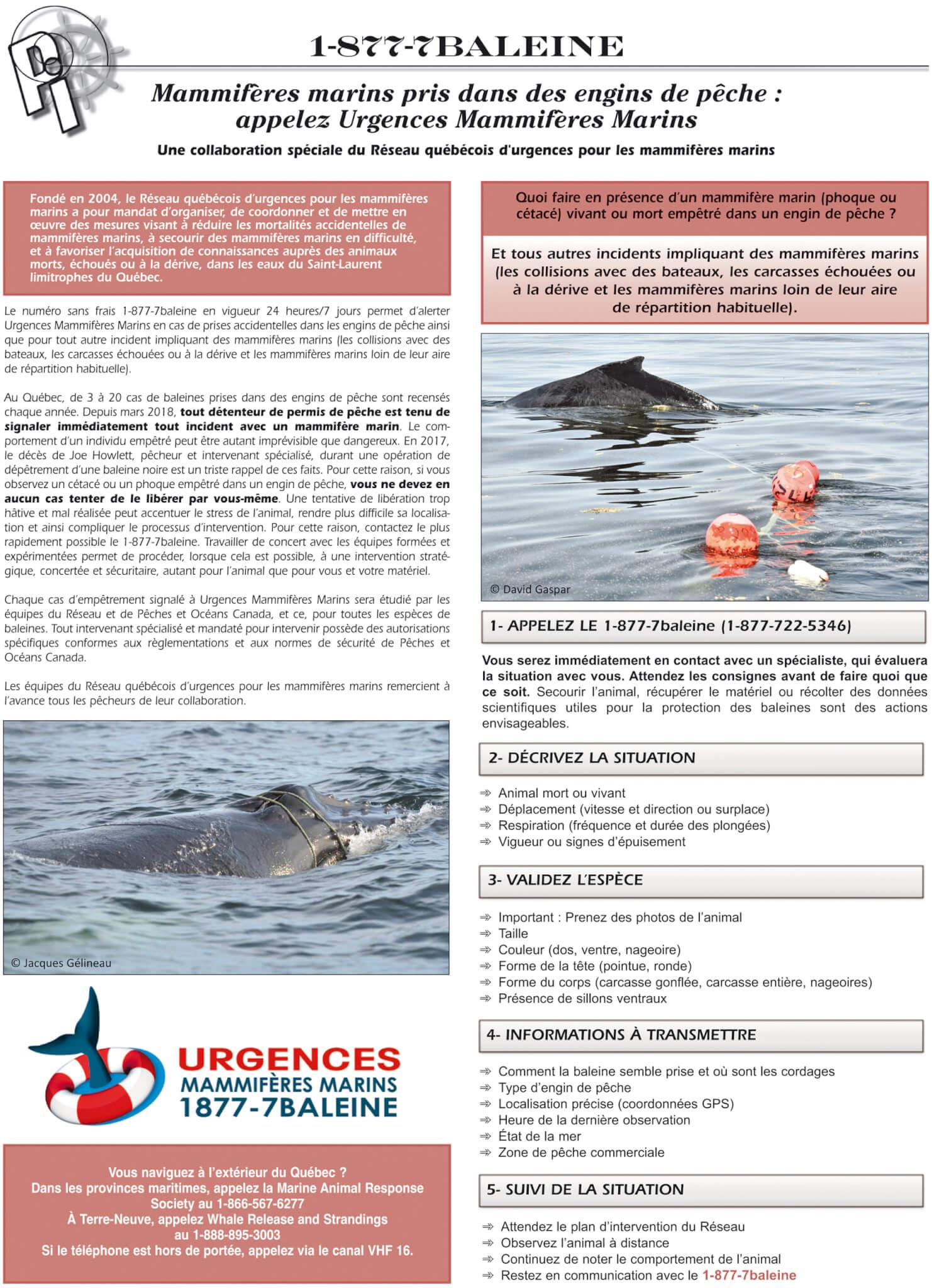 Réseau québécois d'urgences pour les mammifères marins - GREMM
